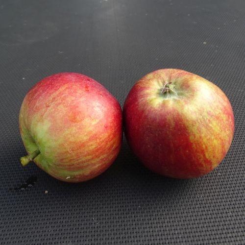Apple 'Cherry Cox'