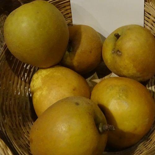 Appelboom  'Hudson Golden Gem'