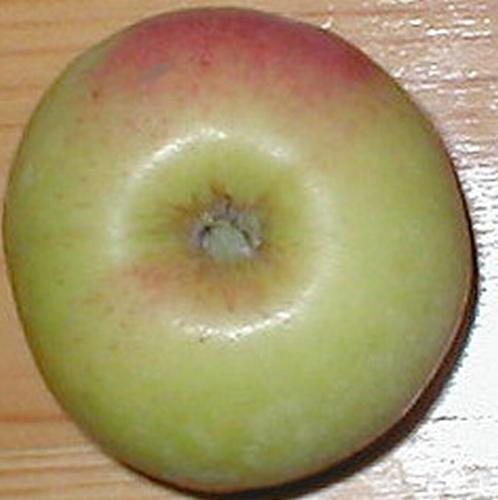 Apple  'Transparant de Cronkels'