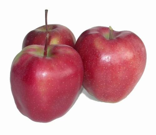 Appelboom  'Gloster'