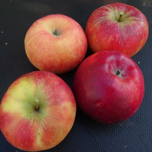 Apple 'Red Topaz ®'