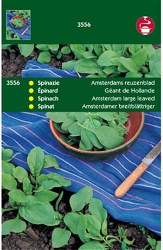 3556 HT Spinazie Amsterdams Reuzenblad 100 gram