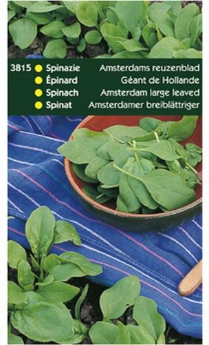 3815 HT Spinazie Amsterdams Reuzenblad 250 gram