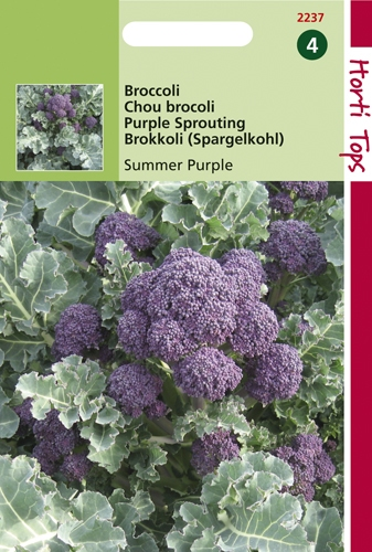 2237 HT Purple Sprouting Summer Purple  1 gramme
