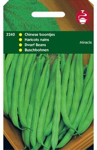 3240 Haricots nains Miracle  100 grammes