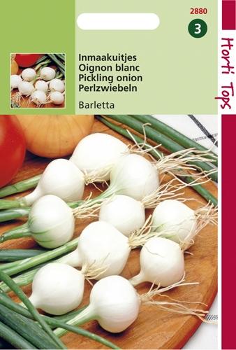 2880 HT Oignon blanc Barletta  4 gramme