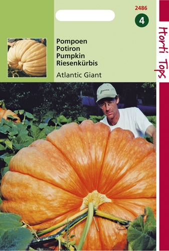 2486 HT Pompoenen Atlantic Giant 2,5 gram