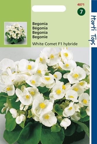 4071 HT Begonia White Comet F1 hybride 700 zaden