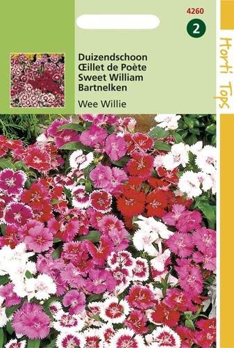 4260 HT Œillet de Poète Wee Willie  0,5 gramme