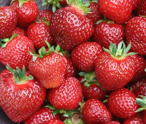 Aardbeienplanten  'Senga Sengana'