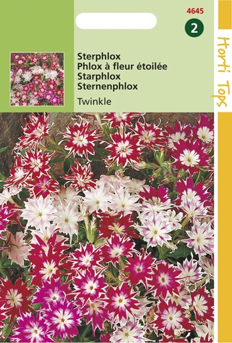 4645 HT Phlox à fleur étoilée Twinkle  0,5 gramme