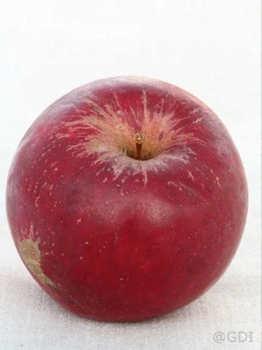 Apple 'Red Jonathan'