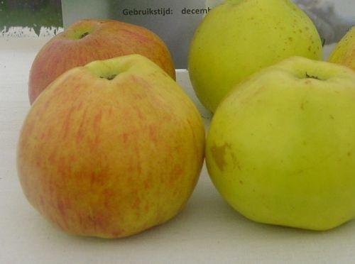 Apple 'Adersleben Calville'