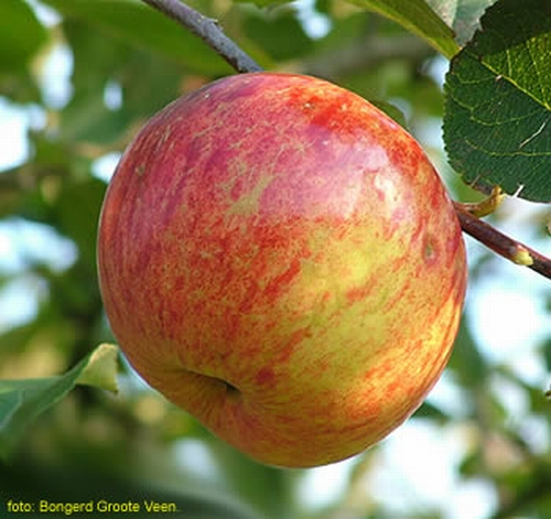 Apple 'Valkappel'