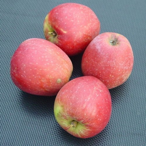 Apple 'Red Pineappel reinette'
