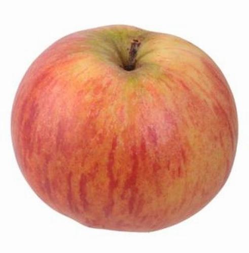 Apple  'Oberlausitzer Muskatrenette'