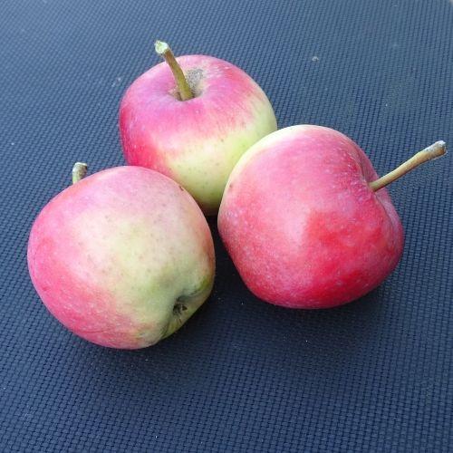 Appelboom  'Pfirsichroter Sommerapfel'