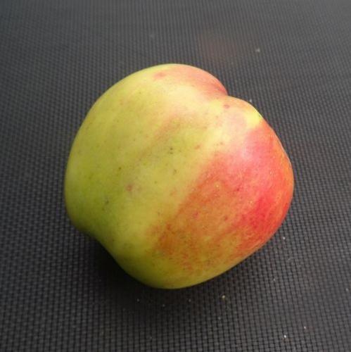 Appelboom  'Lunterse Present'