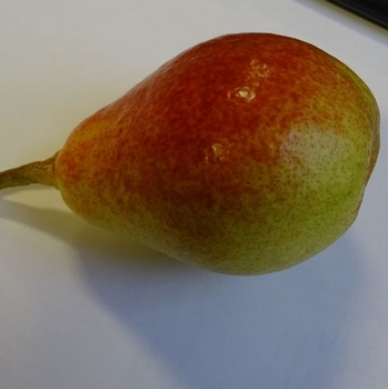 Pear 'Clapp's Favourite'