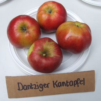 Apple 'Dantziger Kantapfel'