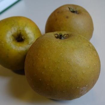 Apple 'Egremont Russet'