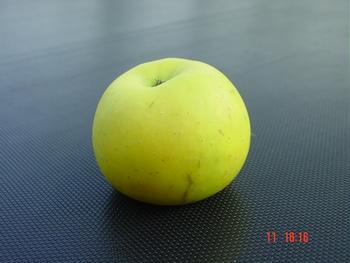 Apple 'Seestermüher Zitronenapfel'