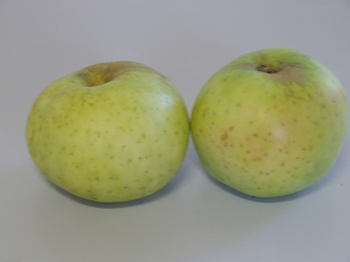 Apple 'Wieneker'