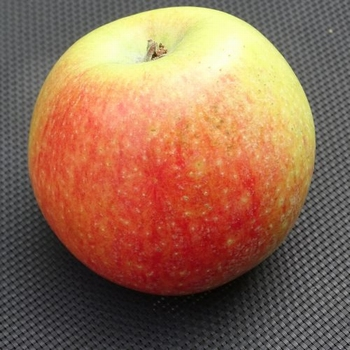 Apple 'Alkmène'