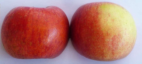 Apple 'Roter Berlepsch'