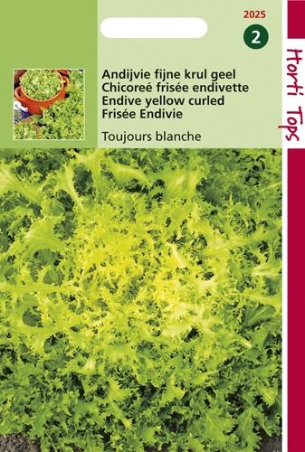 2025 HT Krulandijvie Fijne Krul Geel (Altijd Witte) 3 gram