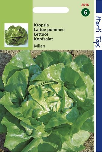 2616 HT Laitue pommée Milan  1,5 gramme