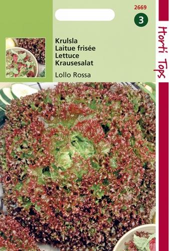 2669 HT Laitue frisée Lollo Rossa  2 gramme