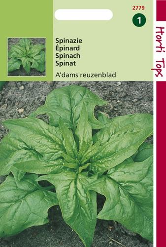 2779 HT Spinazie Amsterdam Reuzenblad Scherpzaad 100 gram