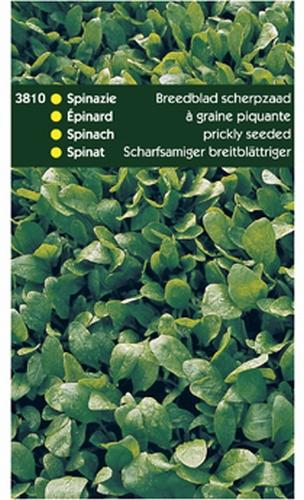 3810 HT Spinazie Breedblad Scherpzaad 250 gram