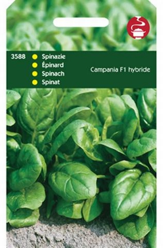 3588 HT Spinazie Campania F1 50 gram