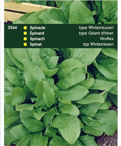 3564 HT Spinazie Type Winterreuzen 100 gram
