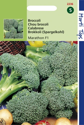 2239 HT Chou brocoli Marathon F1  75 graines