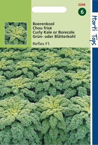 2244 HT Chou frisé Reflex F1  100 graines
