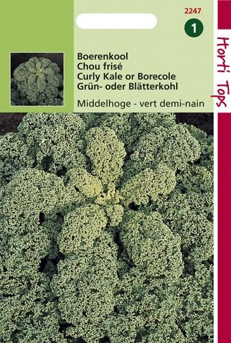 2247 HT Chou frisé vert demi-nain  3 gramme