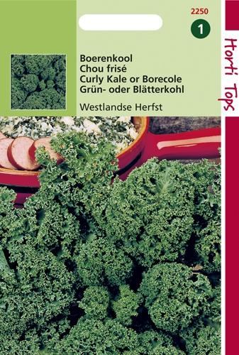 2250 HT Chou frisé de Westland  3 gramme