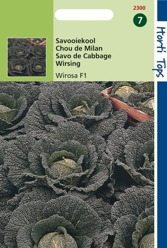 2300 HT Chou de Milan Wirosa F1  100 graines