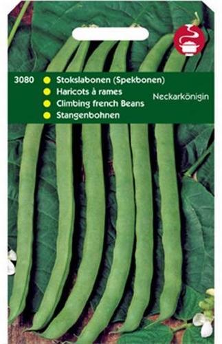 3080 HT Haricots à rames Neckarkönigin  100 grammes