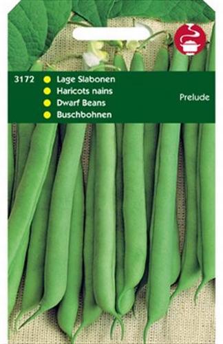3172 Haricots nains Prelude  100 grammes