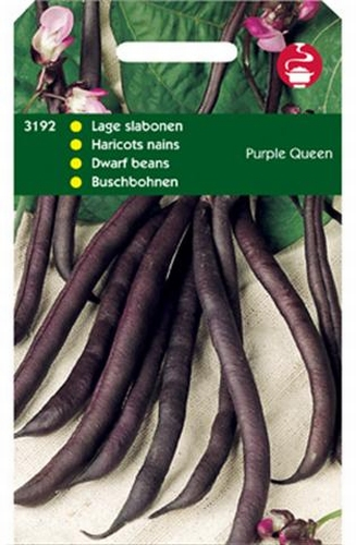 3192 Haricots nains Purple Queen  100 grammes
