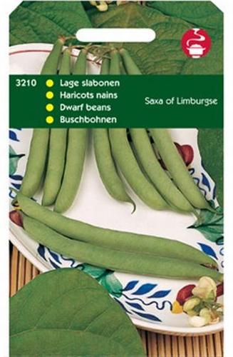 3210 Haricots nains Saxa of Limburgse  100 grammes
