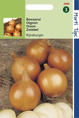 2900 HT Oignon Rijnsburger 5   4 gramme
