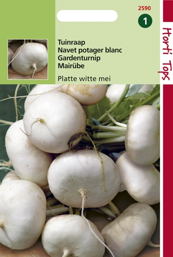 2590 HT Navet potager blanc plat de Hollande  10 gramme