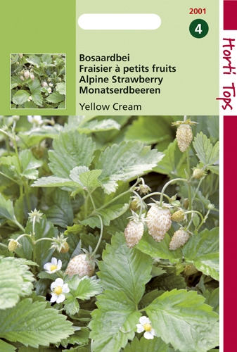 2001 HT Fraisier à petits fruits Yellow Cream  0,25 gramme