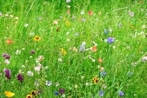881540 Wildbloemen één- en meerjarig 250 gram