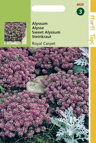 4029 HT Alyssum Royal Carpet 0,5 gram